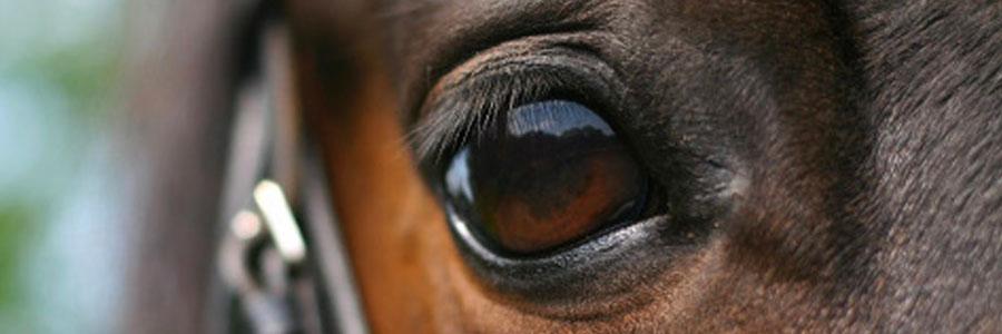 馬のマネージメント