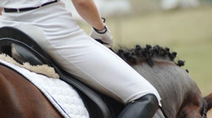 馬にあった最適なトレーニングプラン