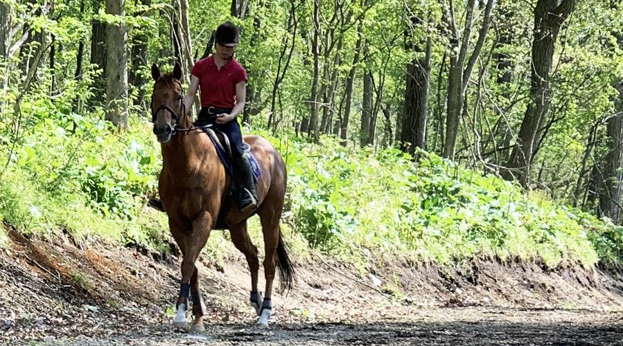 初めて馬に触る方へ